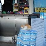 イスタンブールの猫 - 3