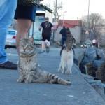 イスタンブールの猫 - 4