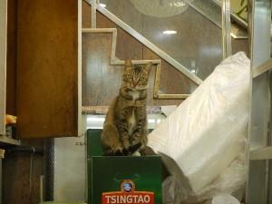香港 - 猫