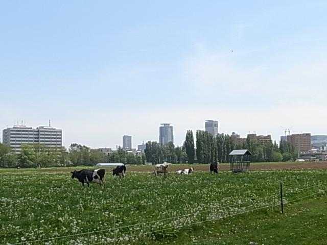 20170530 - 北大試験農場