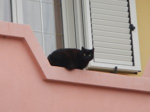 Tinnura - 猫